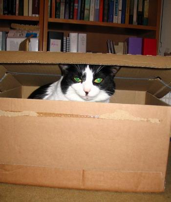 molly box