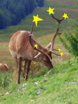 beltane star