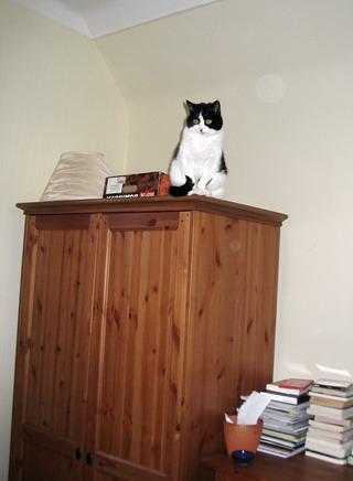 scardy-cat-2